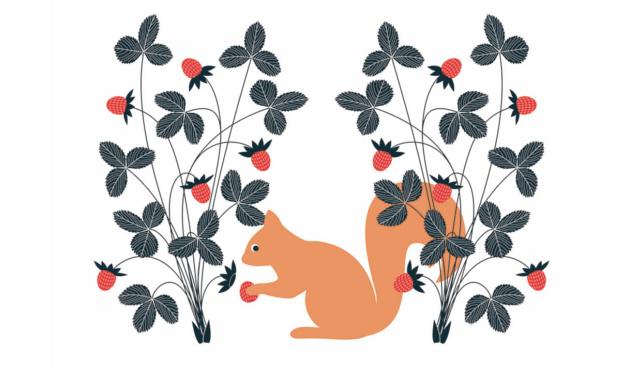 Ardilla naranja comiendo nueces. Ilustración del libro El Secreto, de Émilie Vast. Editorial Leetra.
