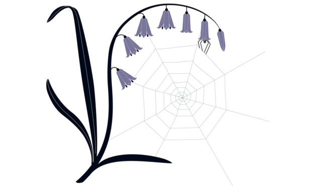 Telaraña en una flor. Ilustración del libro Mientras te espero, de Émilie Vast. Editorial Leetra.